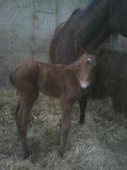Naissance 2013 dans nouvelle(s) d'élevage photo00054-e1366736083622